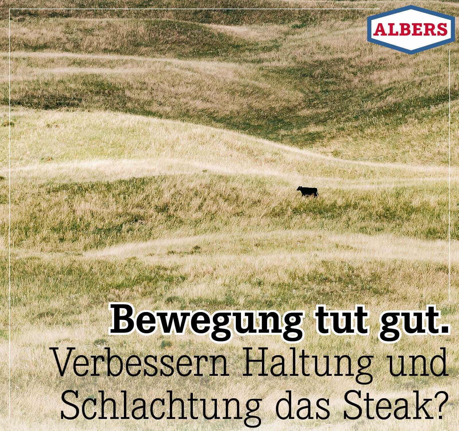 Bewegung tut gut. Verbessern Haltung und Schlachtung das Steak?