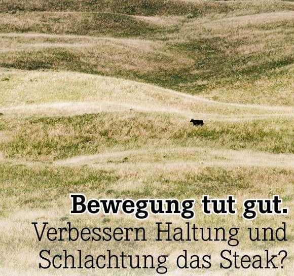 Verbessern Haltung und Schlachtung das Steak?