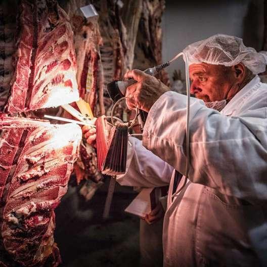 Grading eines Rinderrückens in Australien